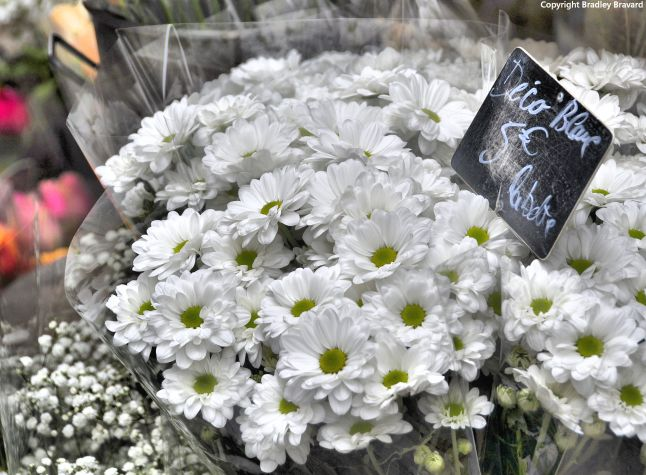 Bundle of white daisies in Paris flower shop