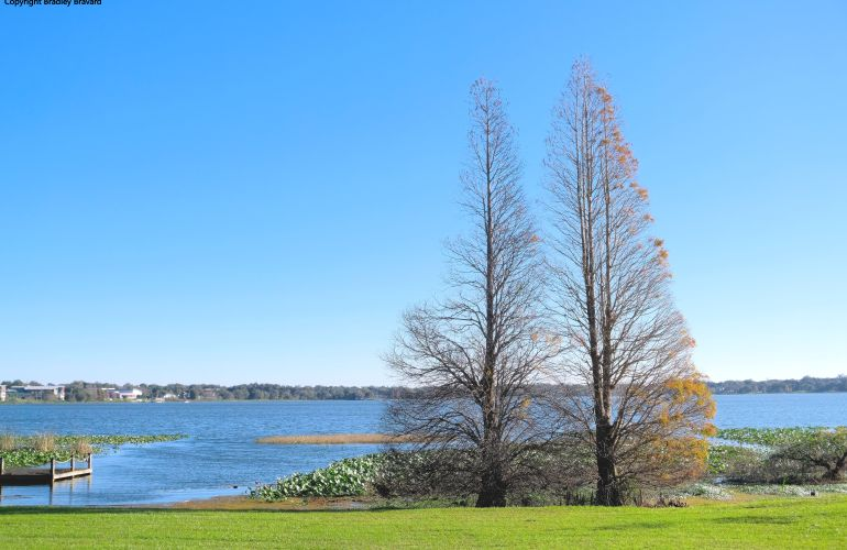 Photo of fir trees by a lake with green grass in the foreground