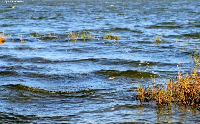 Photo of choppy water on a lake